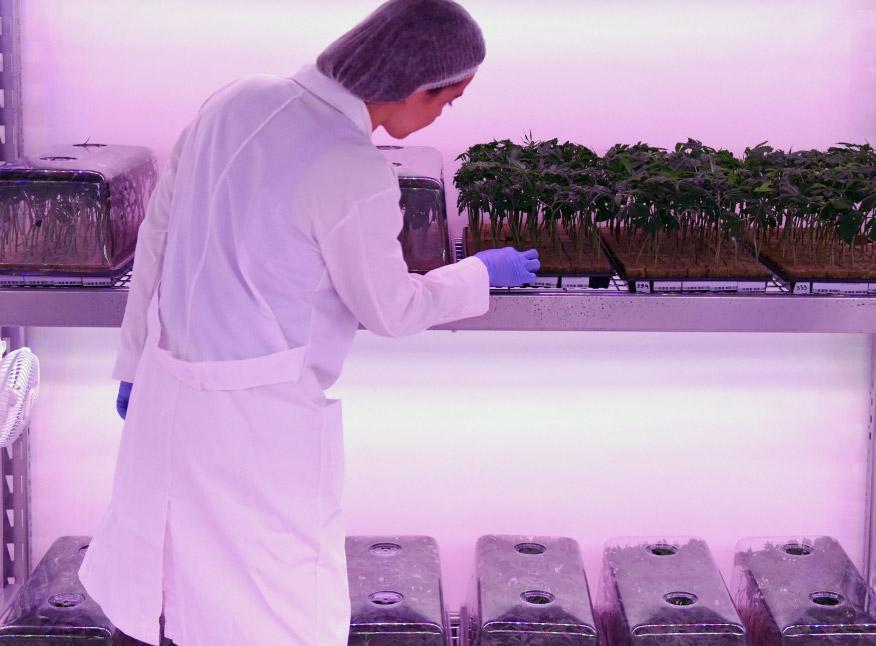 Uruguay apuesta fuerte al mercado de  cannabis médico