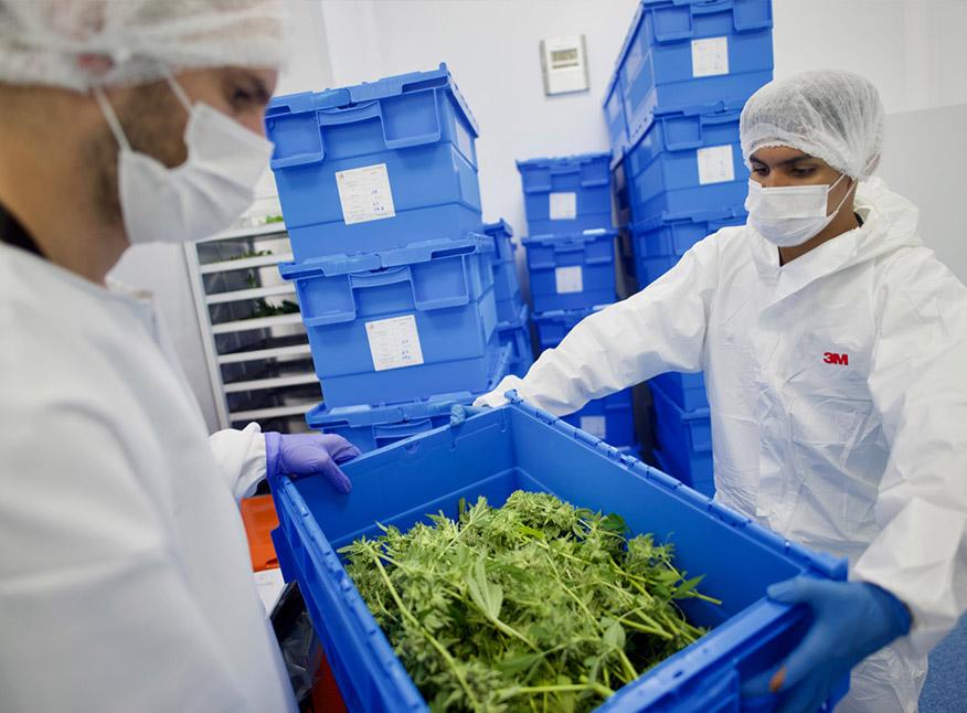 """Uruguay quiere facilitar la llegada de más inversiones en el sector cannabis, mientras su ventaja comparativa """"se va achicando"""""""