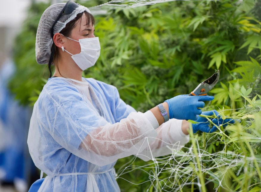 2 Firms First to Export LatAm Medicinal Marijuana to Europe