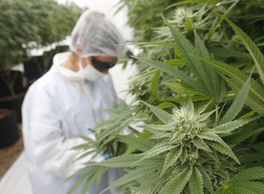 """En el cannabis medicinal Uruguay es como la fábula de la tortuga y la liebre, todo es """"lento"""", pero igual llega """"primero a la meta"""